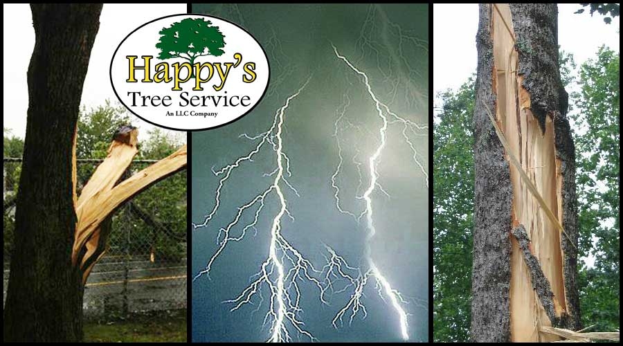 tree service lightning protection