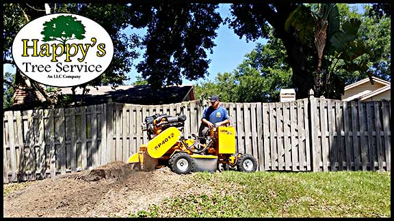 stump removal in pinellas county