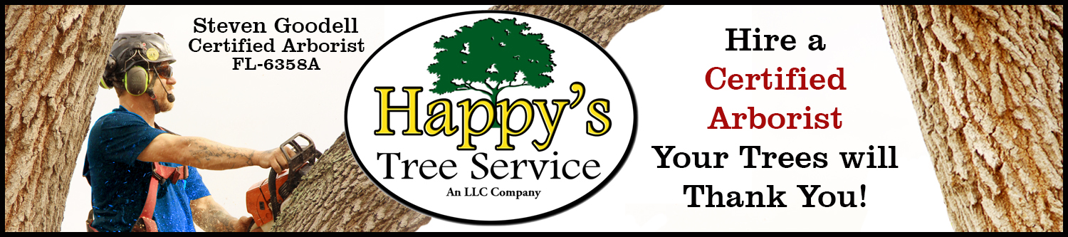 Tree Service Clearwater fl